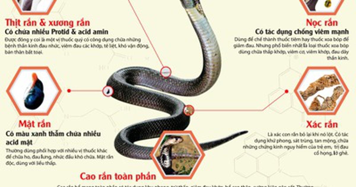 cao rắn hổ mang chữa đau khớp gối